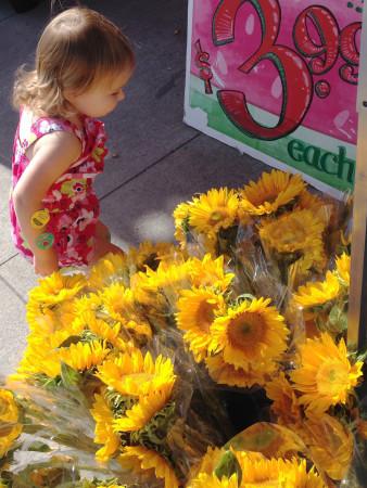 Trader Joe's - Sunflowers