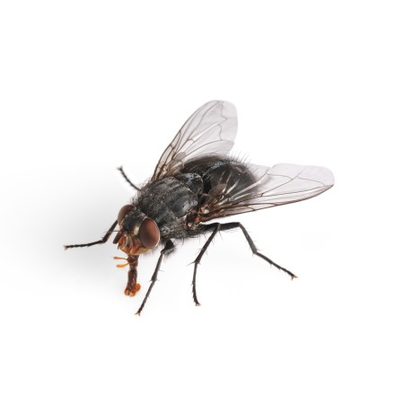 Flying Insect - Gross