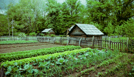 Abundant Harvests - On The Farm (Photo courtesy of Abundant Harvests)