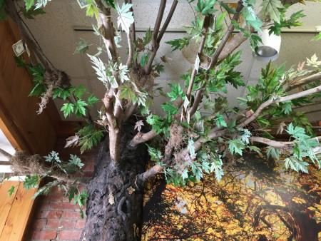Noura Cafe - Money Tree